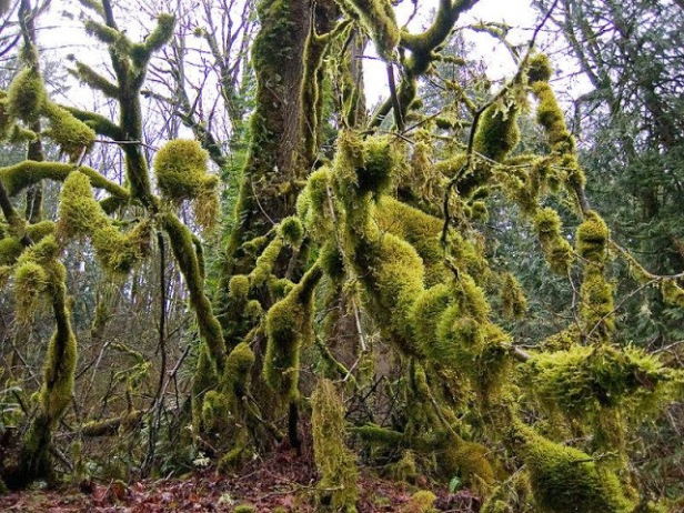 mossy forest downloads