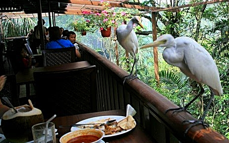 original_Hornbill Restaurant and Cafe-Kuala Lumpur