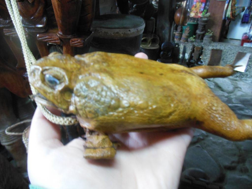 Gustowna pamiątka - portmonetka z suszonej żaby.