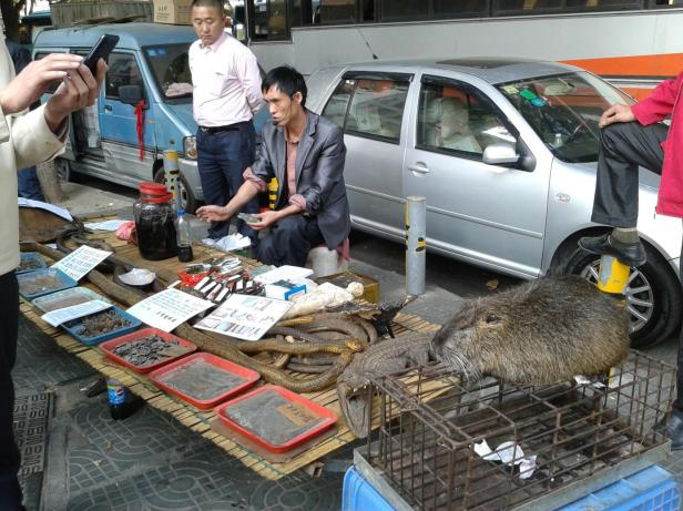 Pan sprzedający suszone gady w Baoan, dzielnicy Shenzhen. Po tym jak zrobiłam zdjęcia tym stworzeniom, jakiś Chińczyk zaczął bezczelnie robić mi zdjęcia, trzymając smartfona dosłownie 50 cm od mojej twarzy. Poczułam się wówczas jak powyższe egzotyczne rarytasy.