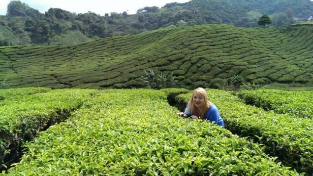 Cameron Highlands, zaledwie 4 godziny drogi z Kuala Lumpur