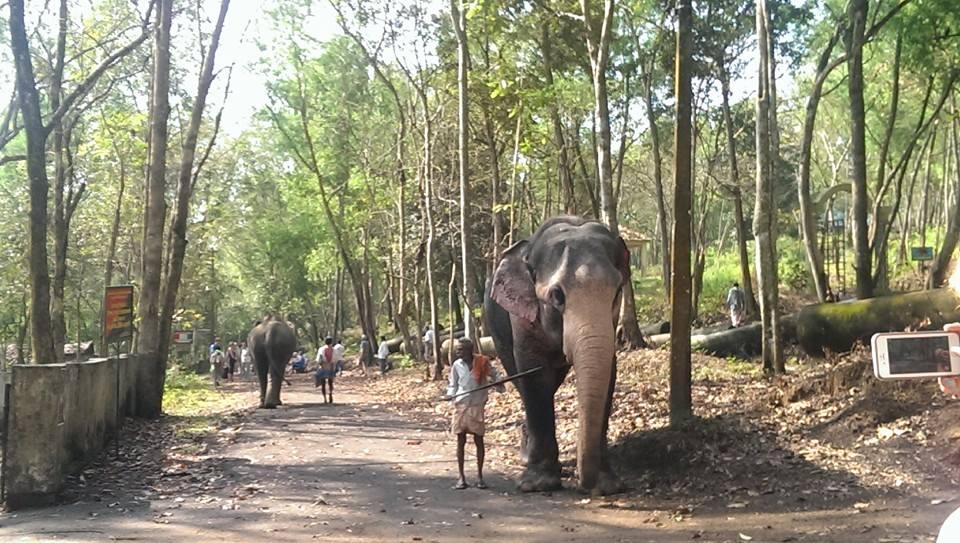 W sierocińcu dla słoni