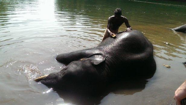 Kąpiel w sierocińcu dla słoni