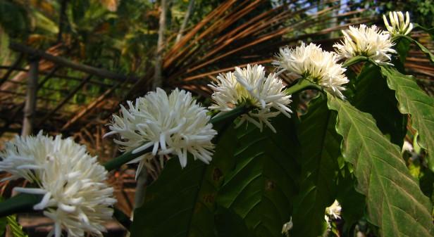 Kawunia kwitnie.