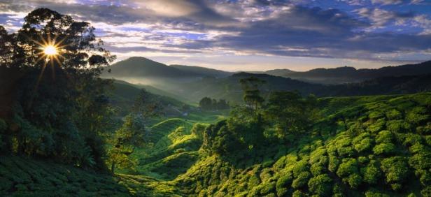 Malaysia_Cameron_Highlands