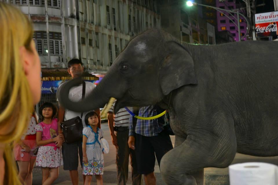 Powszechne - niestety - zjawisko w Tajlandii. Właściciel prowadzi słonia ulicami w dzielnicy turystycznej i każe sobie płacić za zdjęcie ze słonikiem. Przerażające - jeden z gorszych przypadków wyzyskiwania dzikich zwierząt, jaki do tej pory widziałam.