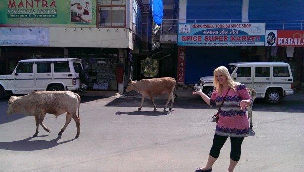 Zdjęcie z Kerali w Indiach. Krowy są tam tak powszechne, jak koty w Polsce. Szok? Nie, raczej śmieszna okazja do zdjęcia i tyle.