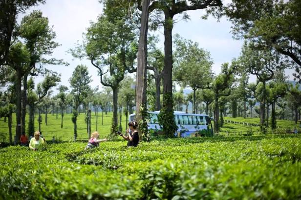 Na plantacjach herbaty w Munnar. W tle - nasz własny autobus z logo KBE!