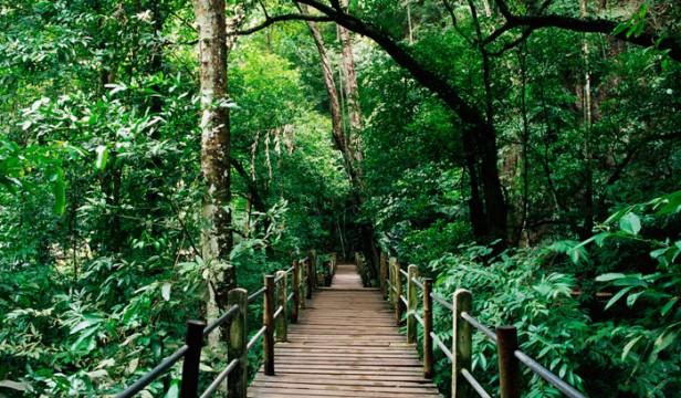Bukit Nanas