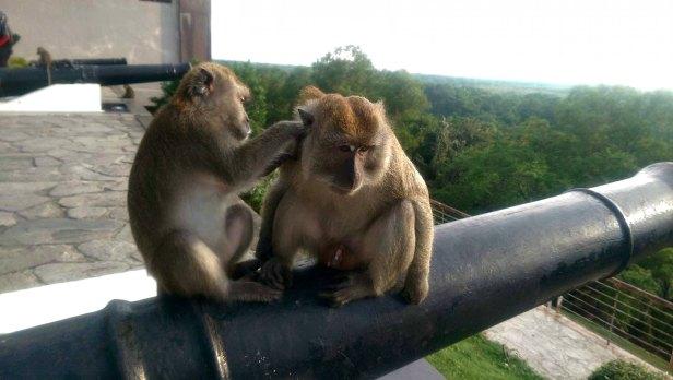 Makaki - mało przyjazne, ale pięknie pozują do zdjęć