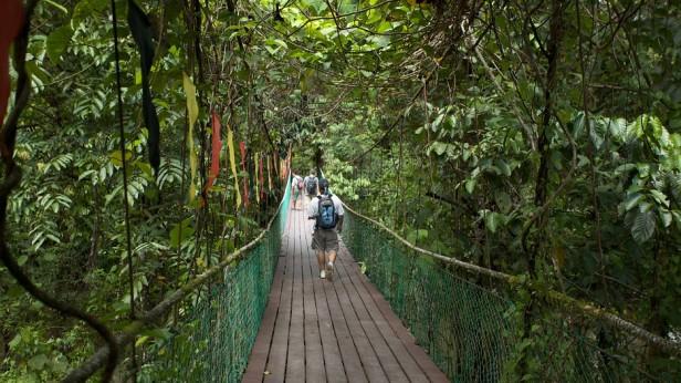 Spacer w lesie w okolicach Mulu
