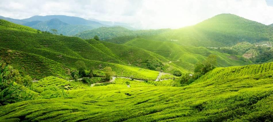 asia-malaysia-borneo-cameron-highlands