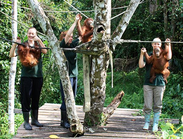 źr. https://www.travellersworldwide.com/malaysia/malaysia-peninsula-orang-utan-conservation